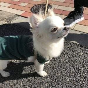 わんこ紹介 鹿肉 ペットフード