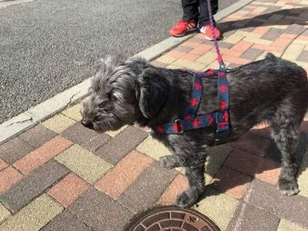信州大学で出会った保護犬 ブログ しかのめぐみ